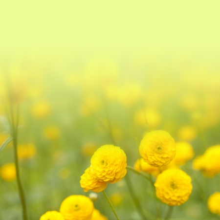green and yellow: floral background