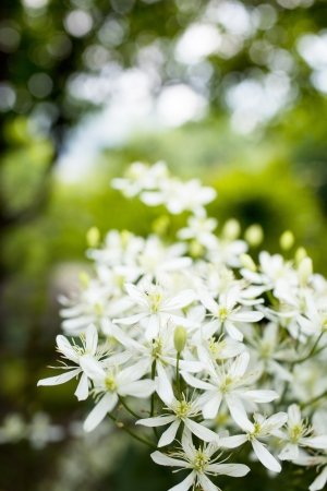 white flower closeup Stock Photo - 14038144