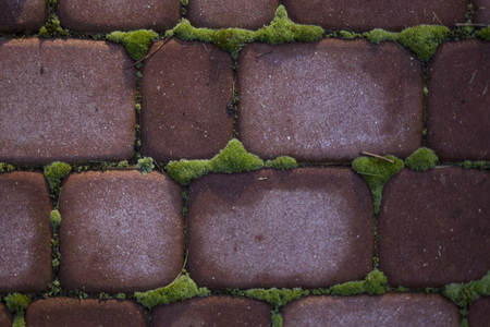 red bricks wall with moss for background