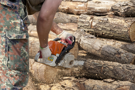 Lumberjack working with a chainsaw