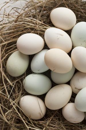 lot of eggs in multiple colors Stok Fotoğraf