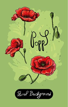 Vector set of painted flowers. Floral background. poppy color