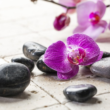 black pebbles: black pebbles and pink orchids for concept of natural beauty treatment