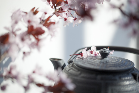 inner beauty: traditional Japanese teapot with cherry blossom flowers for peace and relaxation