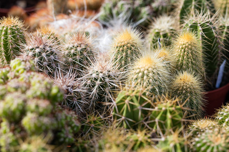 types of cactus: close-up of various cactus textures,spikes and wool in desert-like greenhouse Stock Photo