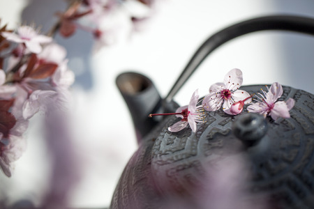zen: traditional Japanese teapot with cherry blossom flowers for zen and relaxation