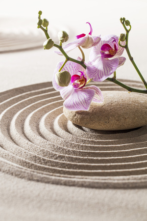 femininity: beautiful orchids and pebble in pure waves of sand for concept of femininity or wellbeing Stock Photo