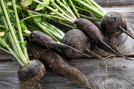 closeup of cracked organic round and long black radishes with fresh green tops and roots on old wood background for sustainable agriculture, studio shot