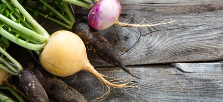 closeup of colorful turnips and black radishes for fresh green vegetables with roots on old wood background for genuine organic harvest, studio shot, above view