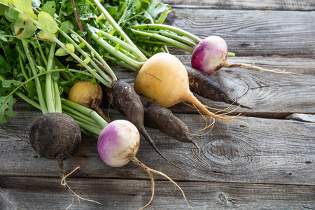 imperfect: bunch of colorful organic imperfect black radishes and turnips with fresh green tops and roots on old wood background for authentic gardening, studio shot