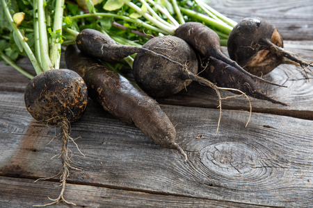 imperfect: imperfect organic healthy black radishes with fresh green tops and roots on old wood background for genuine gardening, studio shot Stock Photo