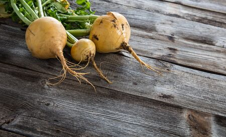 imperfect: copy space for organic seasonal agriculture and vegetarian food with imperfect sustainable yellow turnips with fresh green roots on authentic old wood background Stock Photo