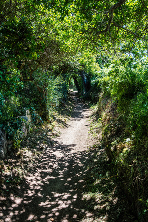 long bucolic path in the summer fresh shade under green foliage and oak trees for bucolic poetic walk and future, landscape in France Stock Photo