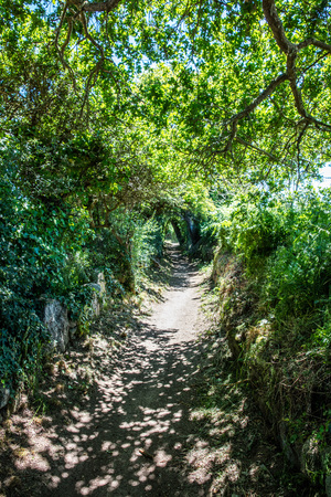 long beautiful path with summer shadows under green foliage and trees for a daydreaming walk or concept of future, landscape in Brittany