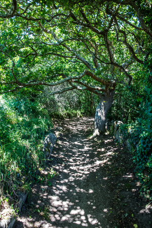sinuous shaded path under green foliage and tortuous trees and branches for a daydreaming walk and future in the woods, landscape in Europe