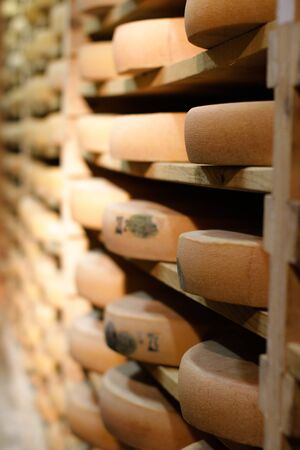 Maturing Comte, French cow milk cheese maturing and aging on traditional spruce wooden shelves in specialty professional fridges, Europe
