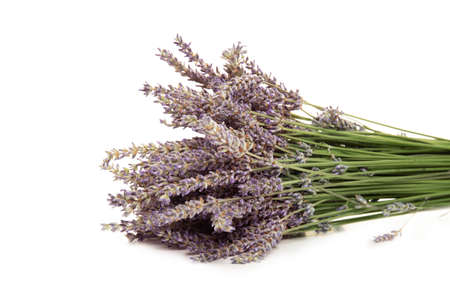 Purple lavender flowers, isolated on a white background Stok Fotoğraf