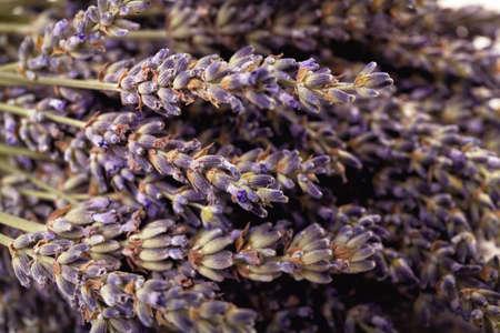Purple lavender flowers close-up. Fragrant lavender Stok Fotoğraf