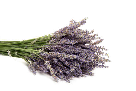 lavender flowers, isolated on a white background