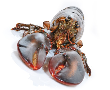 Lobster portrait Stock Photo - 17696407