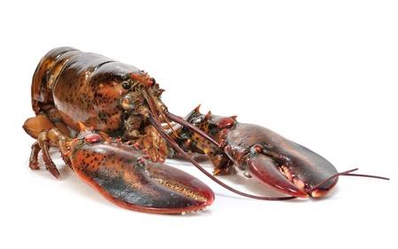 lobster tail: Lobster