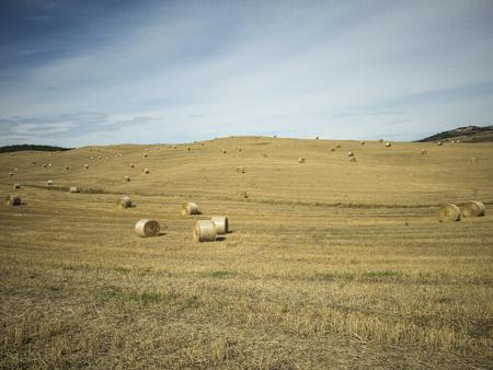 Campo di grano dopo mietitura con balle di fieno