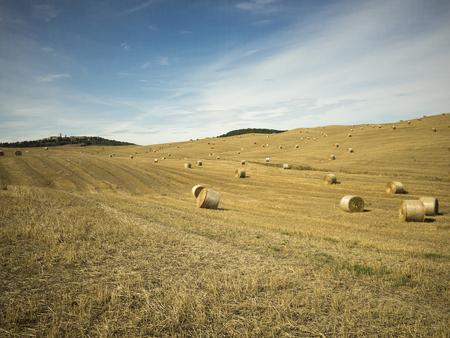 Campo di grano dopo mietitura con balle di fieno Stockfoto - 124396899
