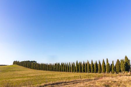 Cypress avenue in the Tuscan countryside