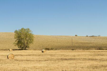 campo di grano con balle di fieno Stockfoto