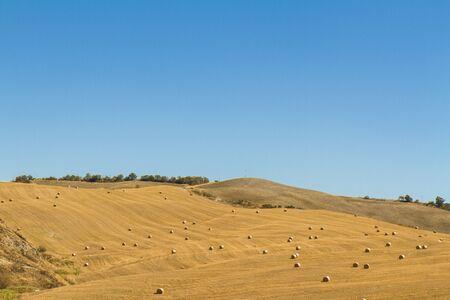 campo di grano con balle di fieno dopo la mietitura