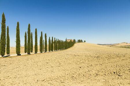 ingresso con viale alberato di casa colonica in Toscana