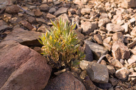 desert plants on rocky desert ground between rocks at high altitude