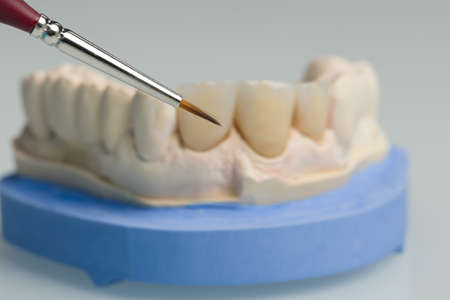 close up of painting work with a brush on artificial dentition in a dental laboratory 版權商用圖片
