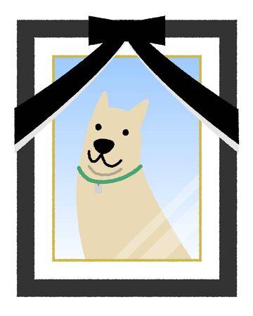 Portrait photo, Dog
