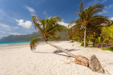 Calm tropical beach with a bent coconut palm tree on a Con Dao island in Vietnam.