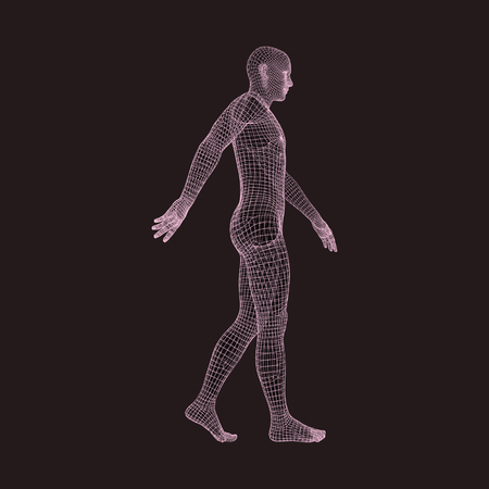 Walking Man. 3D Human Body Model. Geometric Design. Human Body Wire Model.  Vector Illustration.