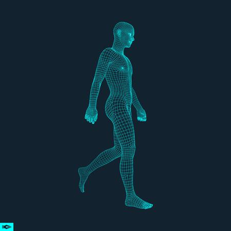 男の 3 D 人体モデルを歩きます。幾何学的なデザイン。人間の体のワイヤー モデル。 ベクトルの図。