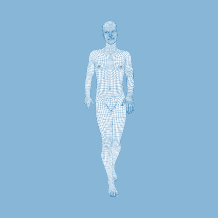 Walking Man. 3D Human Body Model. Geometric Design. Human Body Wire Model.  Vector Illustration.