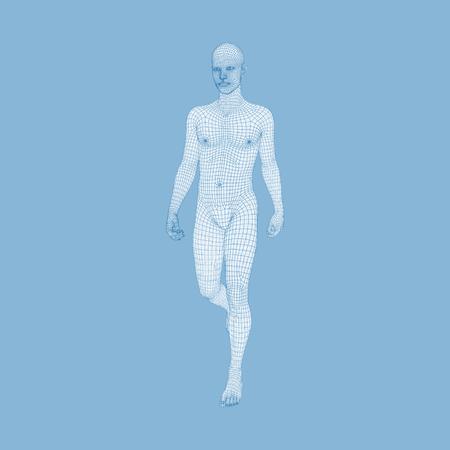 stride: Walking Man. 3D Human Body Model. Geometric Design. Human Body Wire Model.  Vector Illustration.
