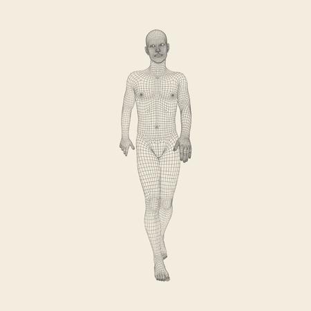 El Recorrer Del Hombre. Modelo 3D Del Cuerpo Humano. Diseño ...