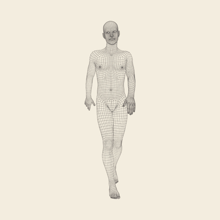 salud publica: El recorrer del hombre. Modelo 3D del cuerpo humano. Diseño geométrico. Modelo de alambre del cuerpo humano. Ilustración del vector. Vectores