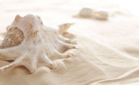 Big shell on beach
