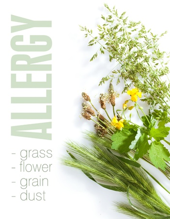 Allergic types of grass on white background  Space for text isolated on solid color  Stock Photo