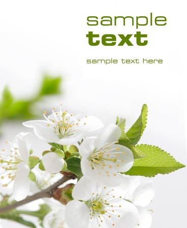 White flowers  Space for text