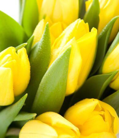 yelow: Yelow tulips  Stock Photo