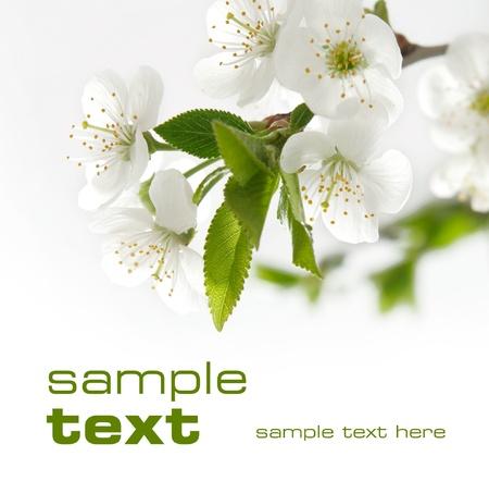ciruela: Espacio flores negro para texto aislado en color s�lido