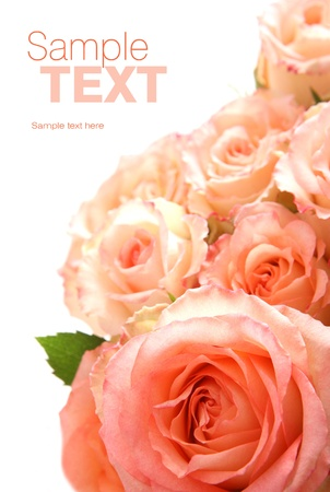 Beautiful rose  Space for text Stock Photo - 13307745