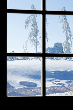winter window: View through paned window on frozen trees Stock Photo