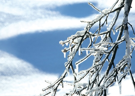 Twig covered with ice and snow photo