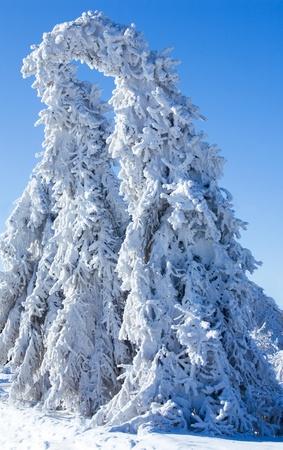 bluer: winter - frozen trees